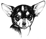 Chihuahua Puppy Receipt Book